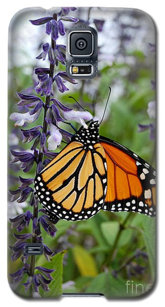 Galaxy S5 Case featuring the photograph Male Monarch Butterfly  by Eva Kaufman