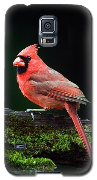 Male Northern Cardinal Cardinalis Galaxy S5 Case by Panoramic Images