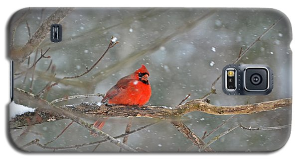 Male Northern Cardinal Galaxy S5 Case