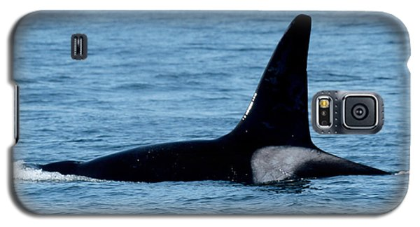 Galaxy S5 Case featuring the photograph Male Orca Killer Whale In Monterey Bay 2013 by California Views Mr Pat Hathaway Archives