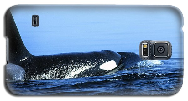 Galaxy S5 Case featuring the photograph Male Orca Off The San Juan Islands Washington 1986 by California Views Mr Pat Hathaway Archives
