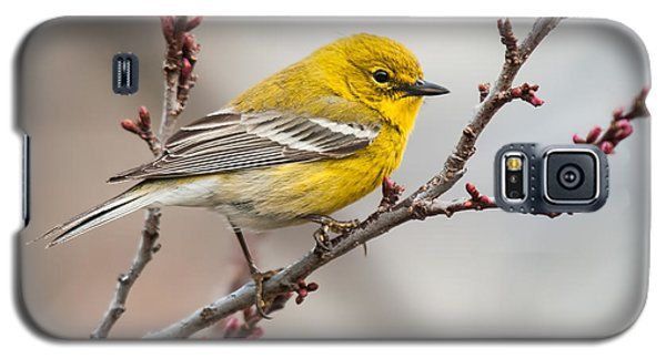 Male Pine Warbler 2 Galaxy S5 Case