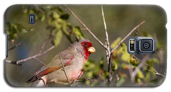 Pyrrhuloxia In Autumn Galaxy S5 Case