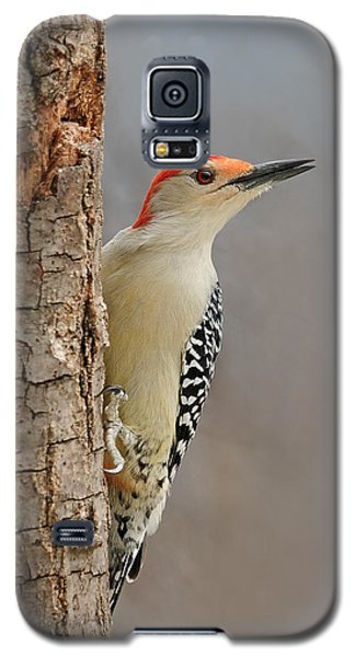 Male Redbellied Woodpecker 1 Galaxy S5 Case