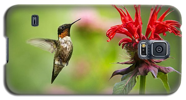 Male Ruby-throated Hummingbird Hovering Near Flowers Galaxy S5 Case by Christina Rollo