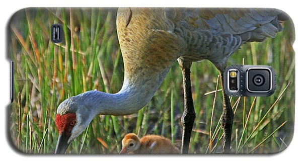 Galaxy S5 Case featuring the photograph Male Sandhill With 4 Day Old Chick by Larry Nieland
