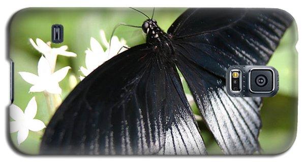 Male Scarlet Swallowtail Galaxy S5 Case