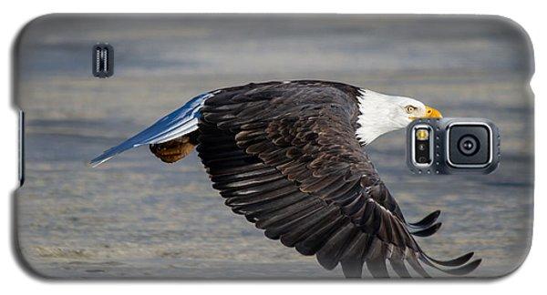 Male Wild Bald Eagle Ready To Land Galaxy S5 Case by Eti Reid