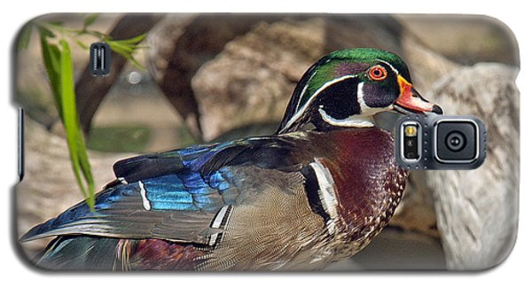 Male Wood Duck Dwf029 Galaxy S5 Case