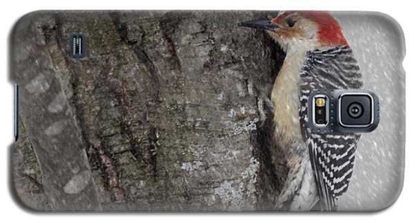 Male Woodpecker Feeding  Galaxy S5 Case