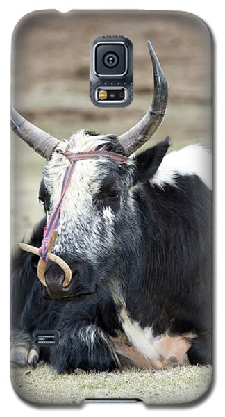 Male Yak In Potatso National Park Galaxy S5 Case