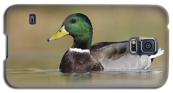 Galaxy S5 Case featuring the photograph Mallard by Bryan Keil