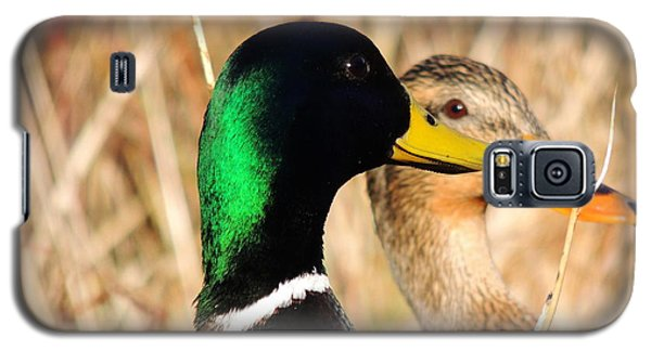 Mallard Couple Galaxy S5 Case by Karen Horn