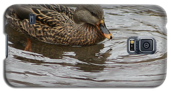 Mallard Duck Female Galaxy S5 Case