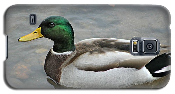 Mallard Duck Male Galaxy S5 Case