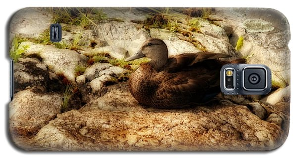 Galaxy S5 Case featuring the photograph Mallard Duck Onaping by Marjorie Imbeau