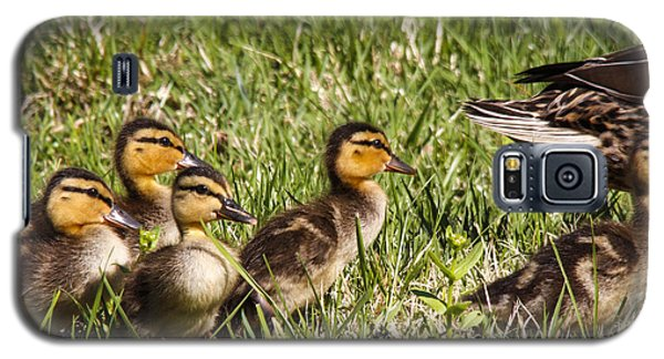 Mallard Ducklings Galaxy S5 Case