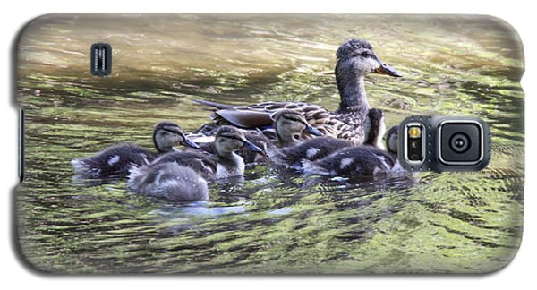Mallard Family On Green Water Galaxy S5 Case