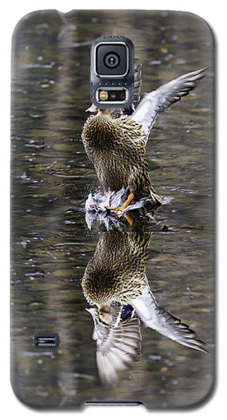 Mallard Hen Landing Galaxy S5 Case