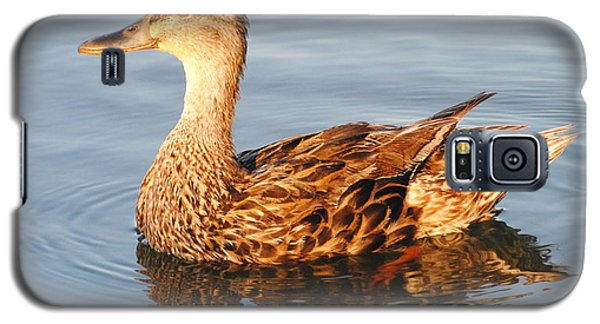 Mallard Hen Profile Galaxy S5 Case