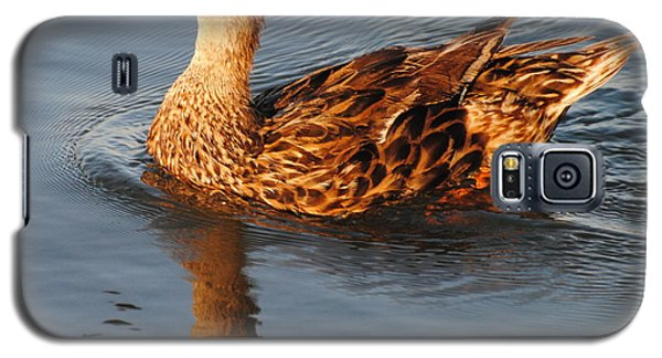 Mallard Hen Swimming Galaxy S5 Case