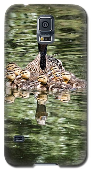 Mallard Hen With Ducklings And Reflection Galaxy S5 Case