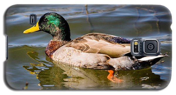 Mallard In Pond Galaxy S5 Case