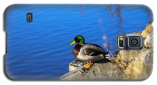 Mallard Looking Over His Domain Galaxy S5 Case