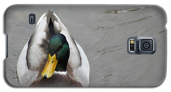 Mallard Portrait Galaxy S5 Case