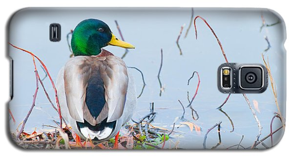 Galaxy S5 Case featuring the photograph Mallard by Ram Vasudev