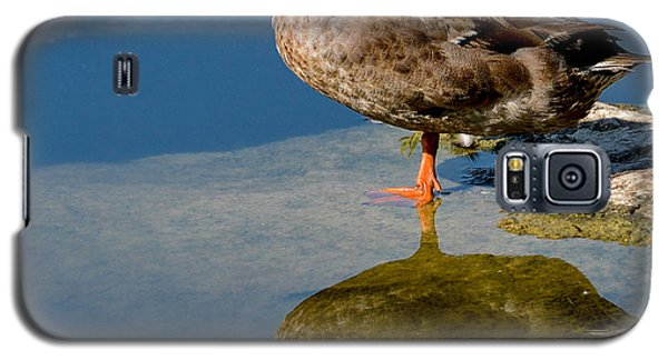 Mallard Reflection Galaxy S5 Case