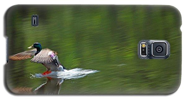 Mallard Splash Down Galaxy S5 Case by Karol Livote