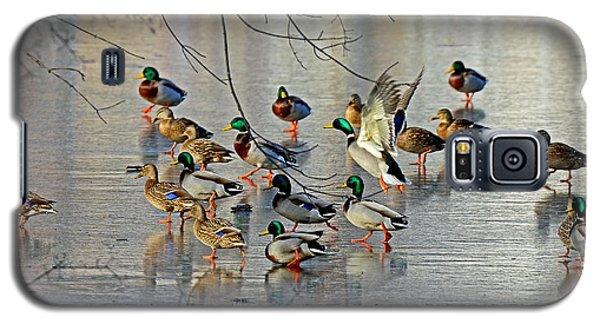 Mallards On A Frozen River Galaxy S5 Case by Rodney Campbell
