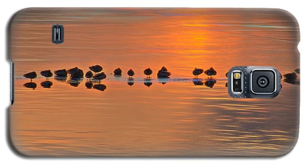 Mallards On Ice Edge During Sunset Galaxy S5 Case