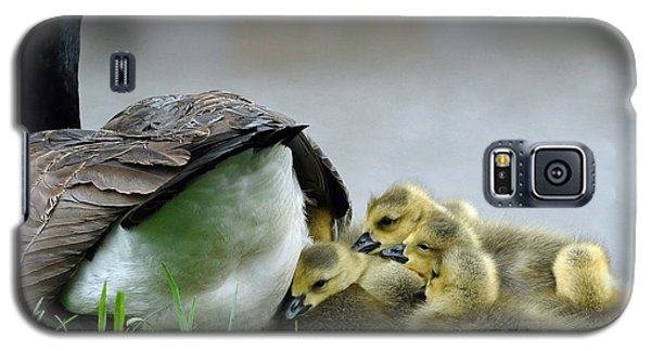 Mama And Goslings Galaxy S5 Case by Lisa Phillips