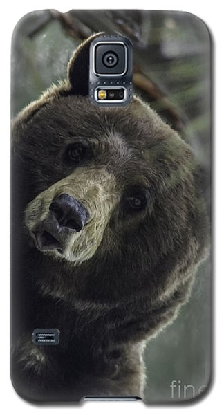 Galaxy S5 Case featuring the photograph Mama Bear by Mitch Shindelbower