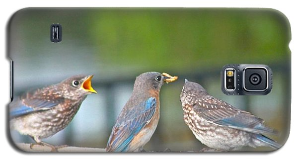 Galaxy S5 Case featuring the photograph Mama Bluebird And Fledglings by Jeanne Kay Juhos