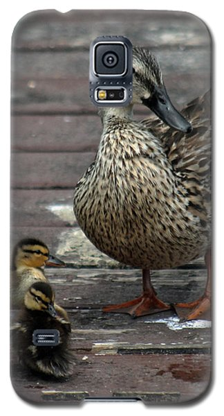 Mama Duck And Ducklings Galaxy S5 Case