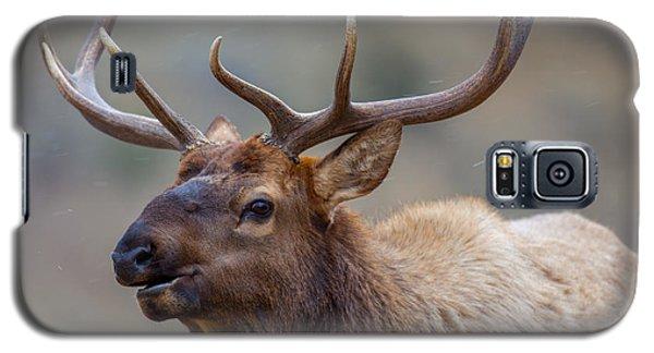 Mammoth Bull Galaxy S5 Case