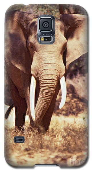 Mana Pools Elephant Galaxy S5 Case