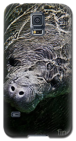 Galaxy S5 Case featuring the photograph Manatee 01 by Melissa Sherbon