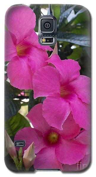 Mandevilla Beauty Galaxy S5 Case