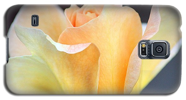 Galaxy S5 Case featuring the photograph Mango's Dance by The Art Of Marilyn Ridoutt-Greene