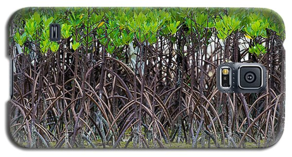 Galaxy S5 Case featuring the photograph Mangroves by Avian Resources