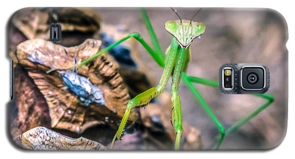 Mantis On A Pine Cone Galaxy S5 Case by Rob Sellers