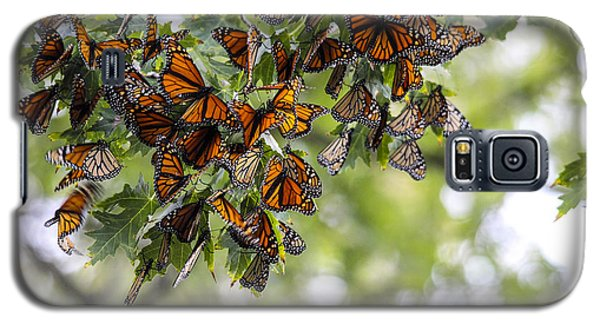 Many Migrant Monarchs Galaxy S5 Case