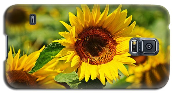 Many Sunflowers Only Two Bees Galaxy S5 Case by Mike Martin