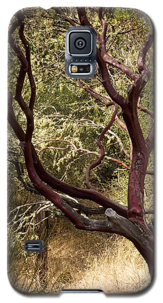 Manzanita Tree Galaxy S5 Case