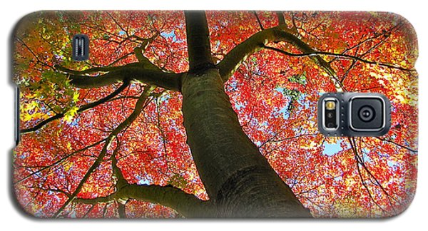 Maple In Autumn Glory Galaxy S5 Case by Sean Griffin