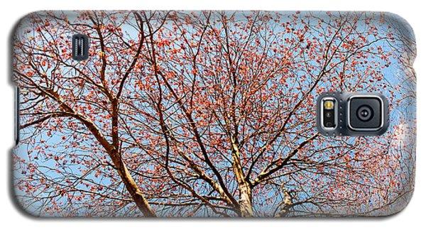 Maple In Bloom Galaxy S5 Case